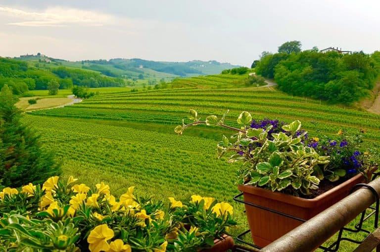 View on Vineyards that produce the best wines in Slovenia and Croatia - Goriska Brda